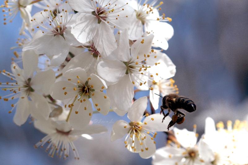 Pollinator by Niverdia
