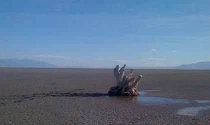 A Tree Dies Alone by Jazziered