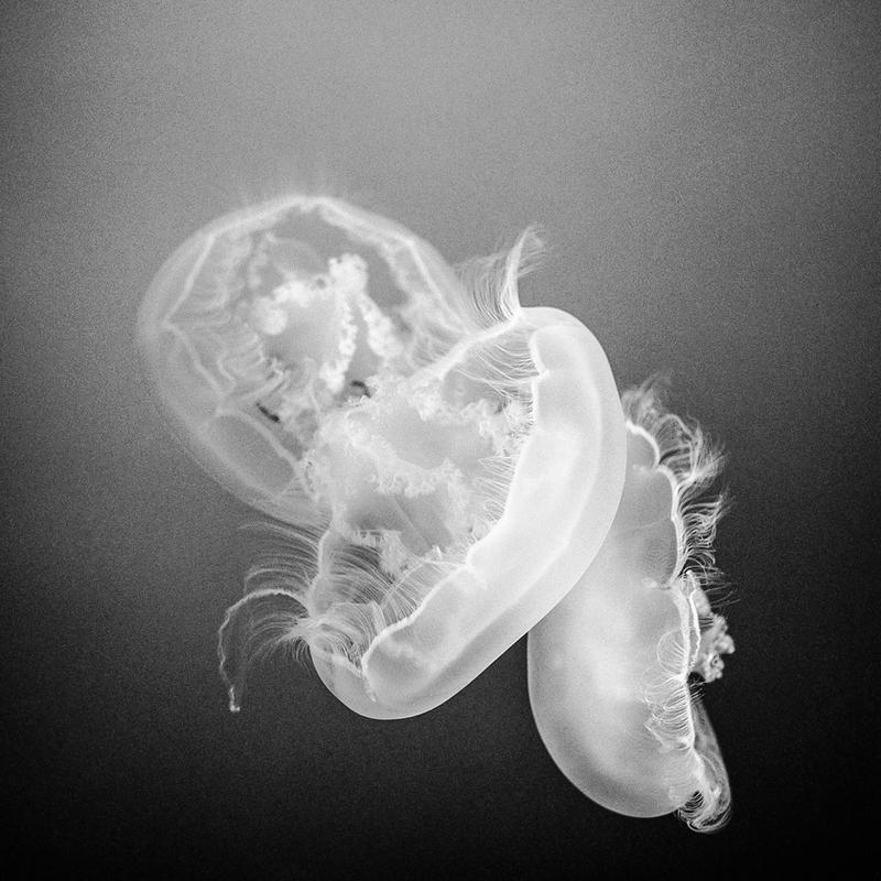Jellies by jonniedee