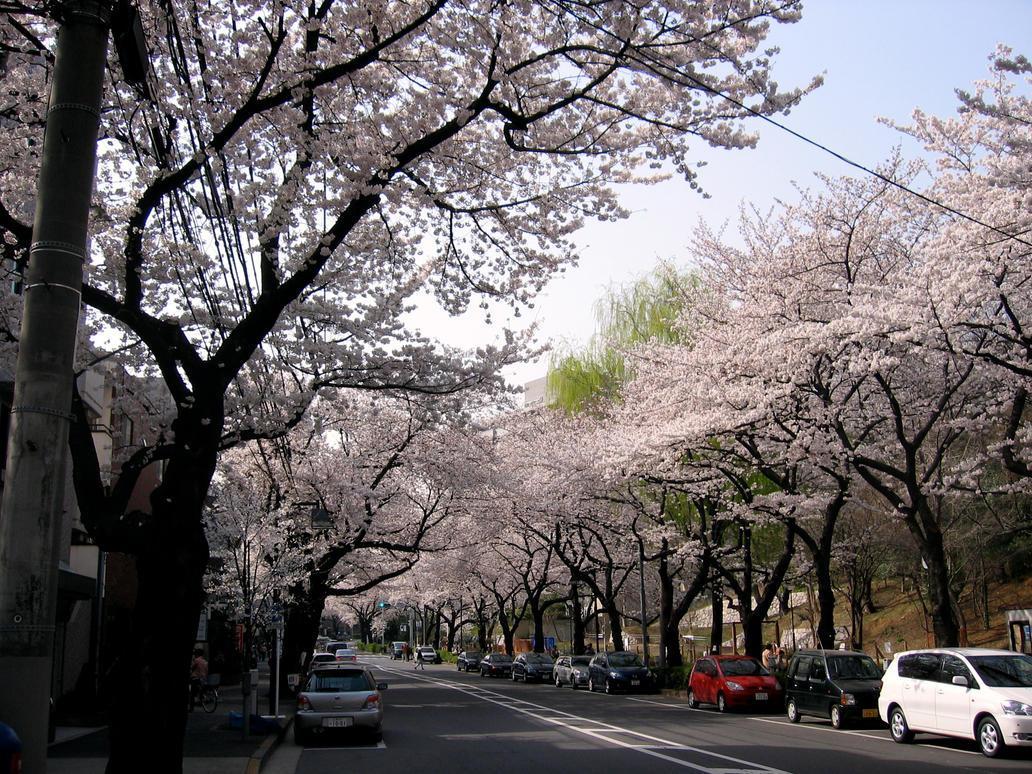 tokyo in spring by BABaracusA-TEAM on DeviantArt