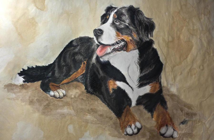 Bernese Mountain Dog by alvija