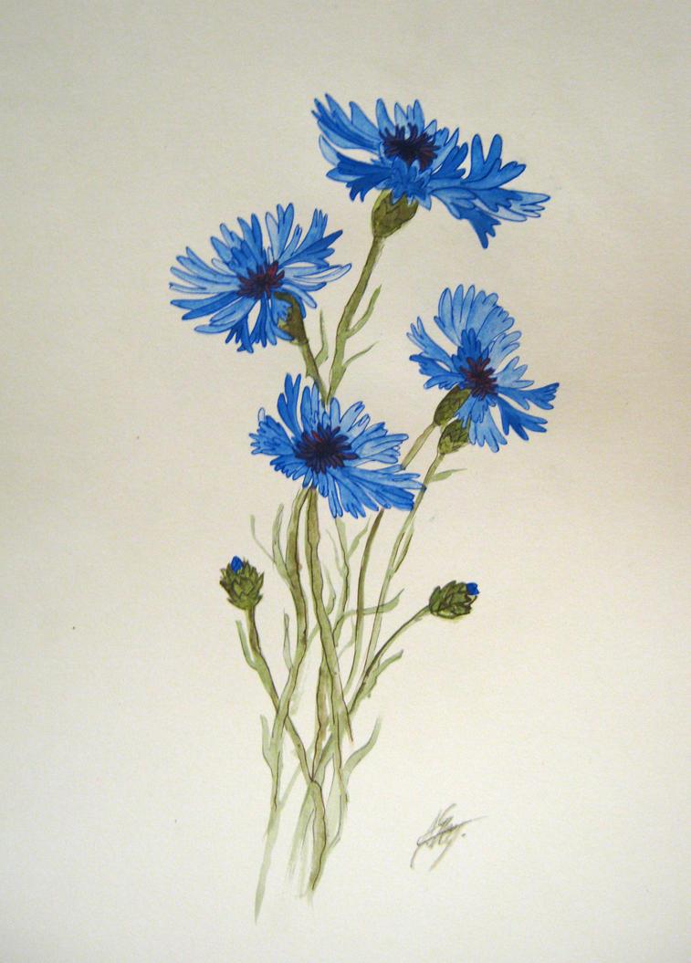Bluebottle by alvija