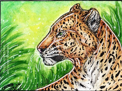 Jungle - aceo for Woodswallow by xCollecx