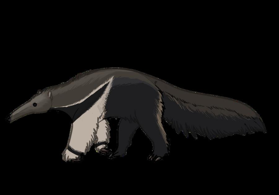 giant anteater by desertdruid on deviantart rh deviantart com  giant anteater clipart