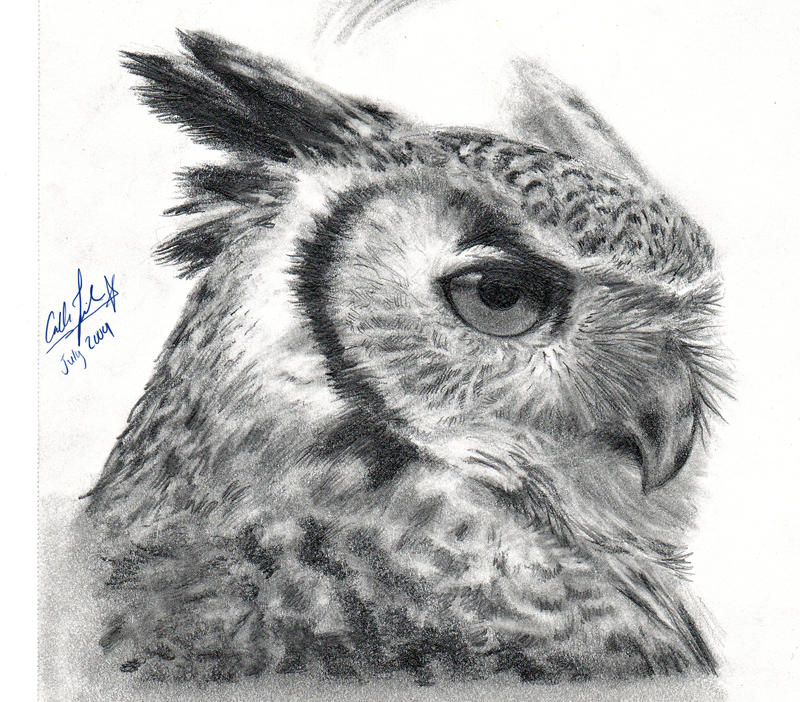 how to draw a detailed owl