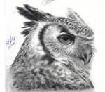 Owly Owl 2