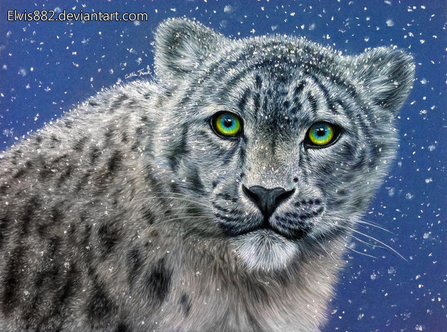 Snow Leopard by CallieFink