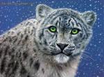 Snow Leopard by CallieFink