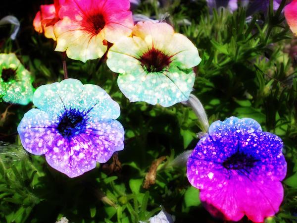 Rainbow Glitter Flowers by LT-Arts on DeviantArt