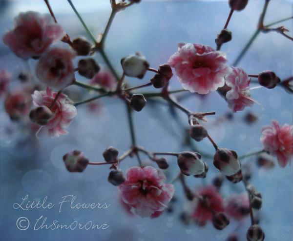 .Little Flowers. by LT-Arts