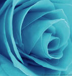 Cyan Rose by LT-Arts