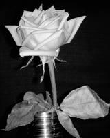 Rose BandW by mcb011789