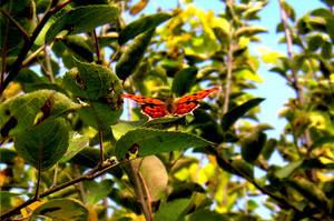 Orange Flight by mcb011789