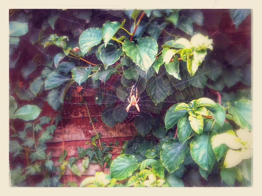 Spider Ayl-garden by Ardenta