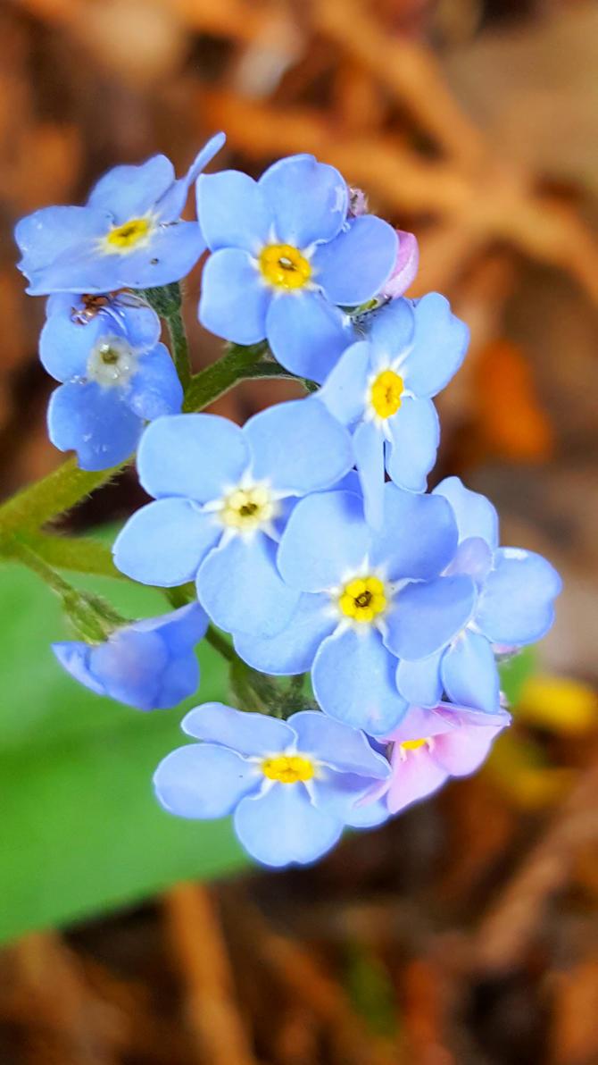 Flower 1 by Ardenta