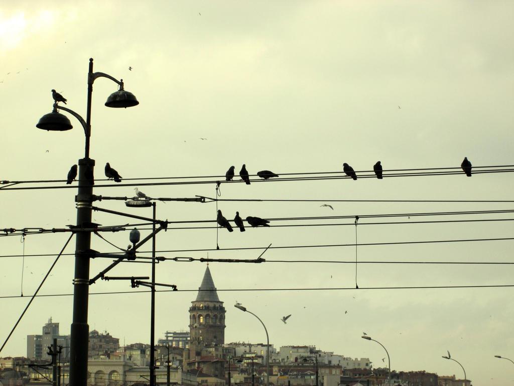 electric birds by mustafamortas