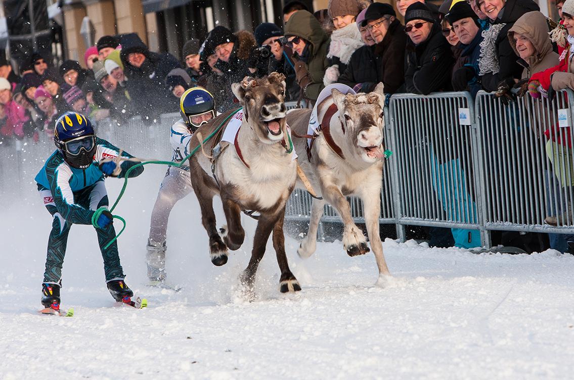 Reindeer Festival by Orzel