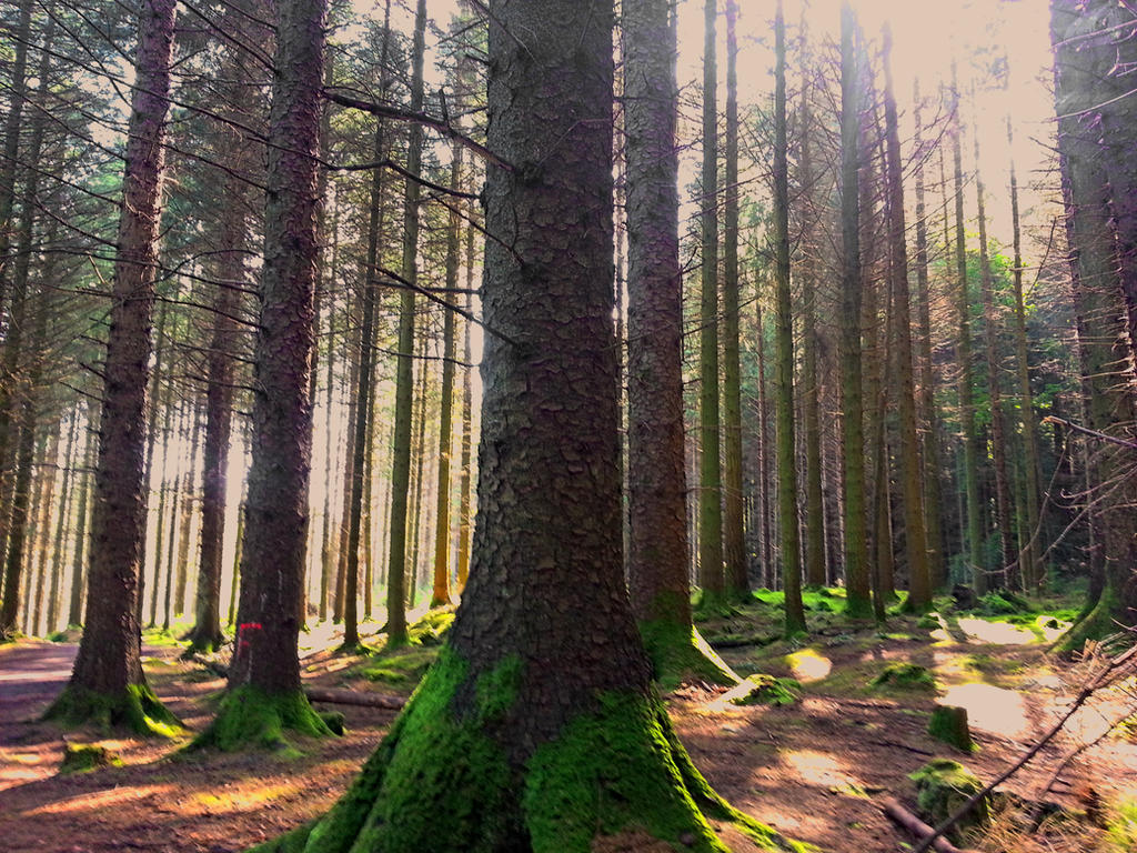 Width of the Forest by Willberr