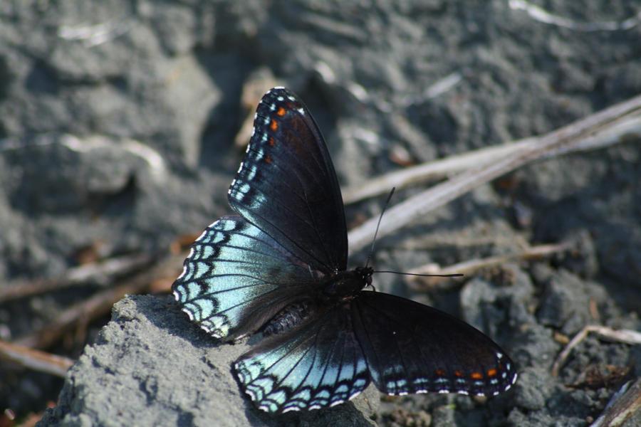 Butterfly 3 by FrankiesStockPhotos