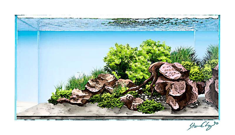 Marvelous Aquasketch, A Digital Art Layout Plan   Aquascaping   Aquatic Plant Central