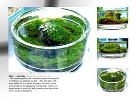 'Aquascape' Petre Dish by StevenChong-no-GMF