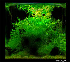 'Aquascape' Green Mountain 2 by StevenChong-no-GMF