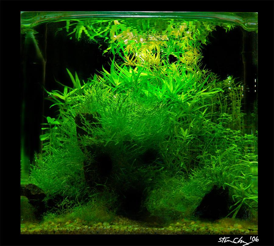 Aquascape Green Mountain 2 By Stevenchong No Gmf On Deviantart