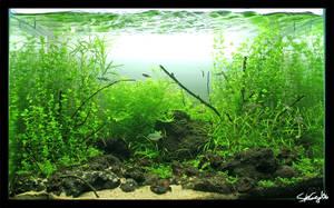 Aquascape:  Naupaka Coast 3 wk by StevenChong-no-GMF