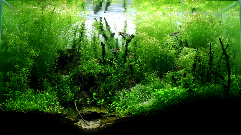 Amazing Aquascape 2007: Bamboo Forest By StevenChong No GMF ...