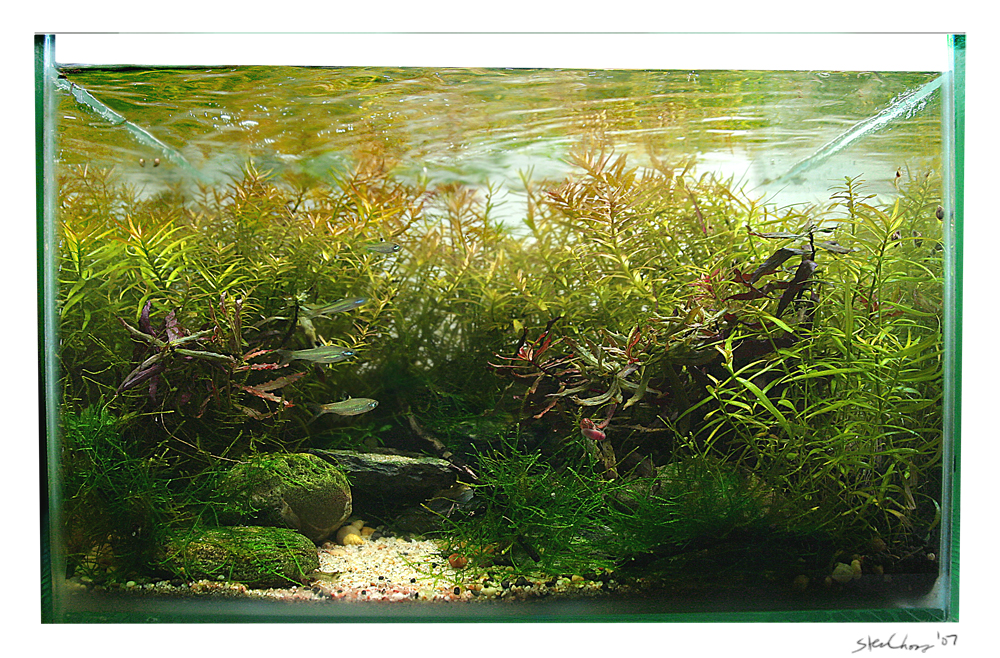 Aquascape Maple Forest By Stevenchong No Gmf On Deviantart