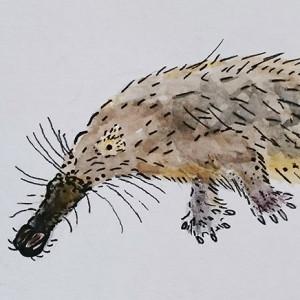 Kutchicetus-Minimus's Profile Picture
