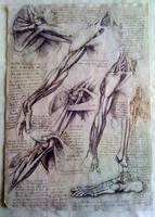 Leonardo da Vinci - Arms by resalta