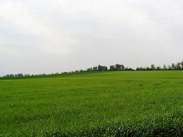 meadow by Titelgestalten