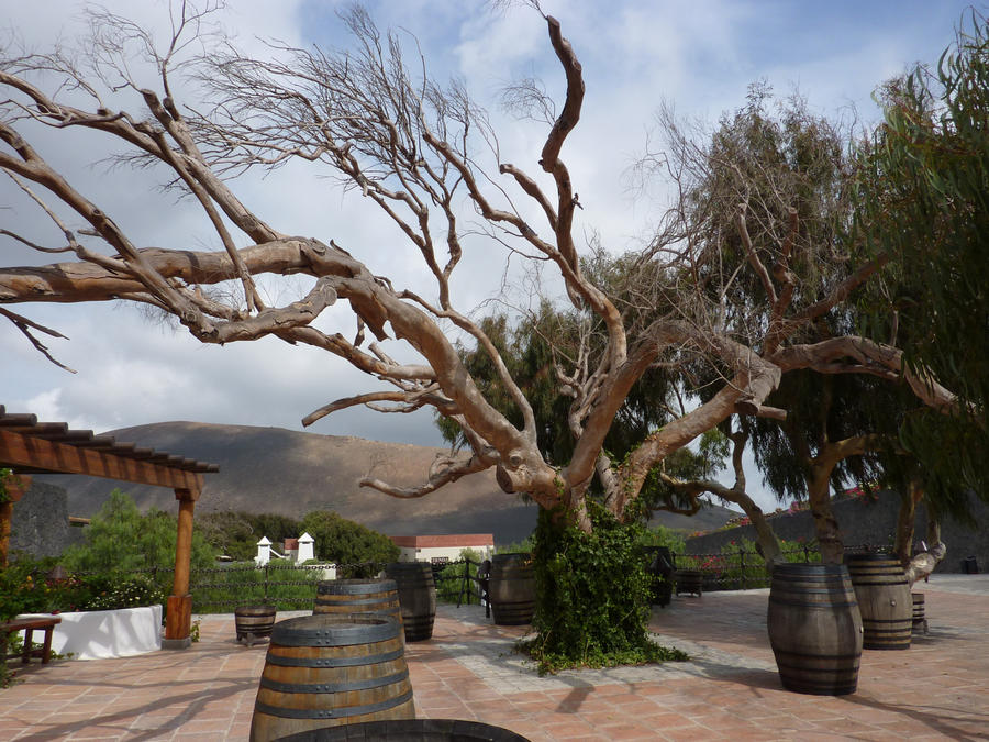 tree II by Titelgestalten
