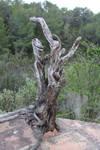 -roots II-