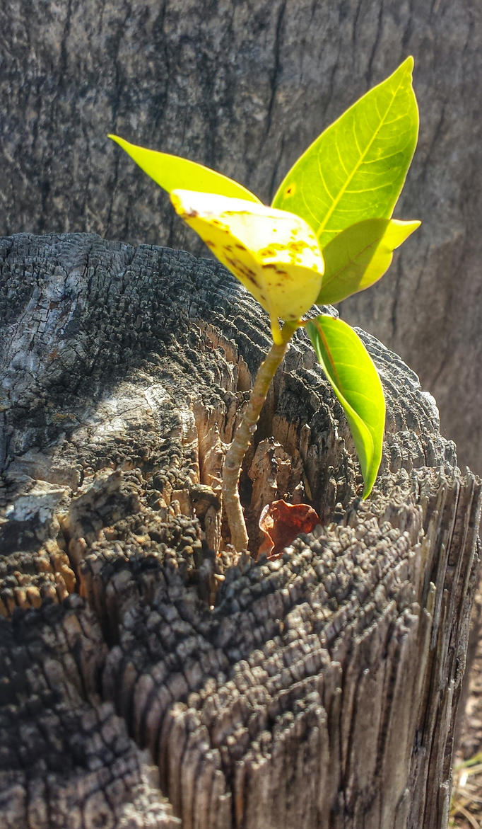 Persistence by ecfield