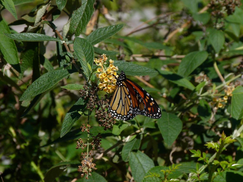 Butterfly by ecfield