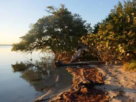 Driftwood+Mangroves