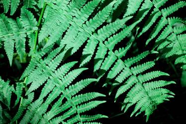 Ferns by VampireWarrior0303