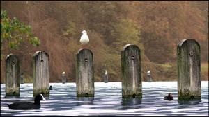 Birdplace by saftsaak