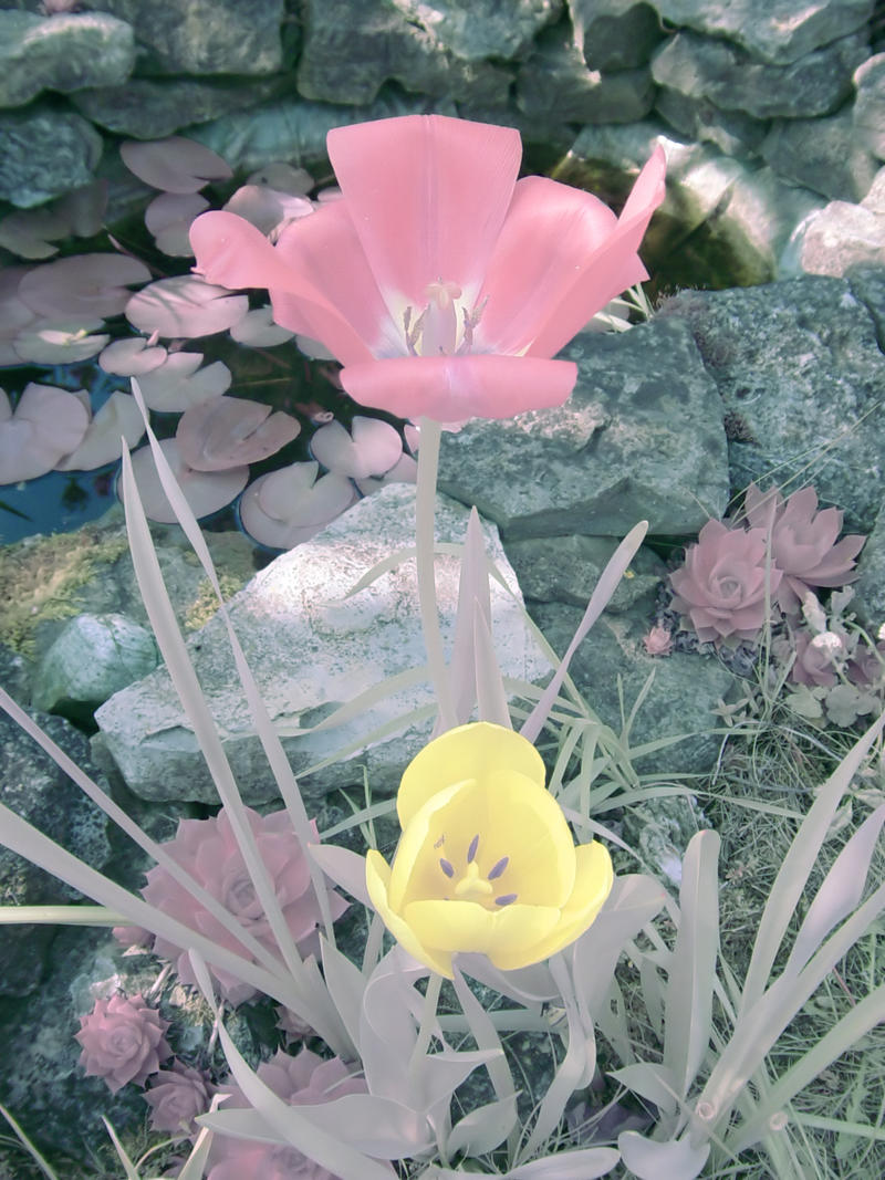 IR Flowers by ThePraiodanish