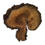 Tree Dualism