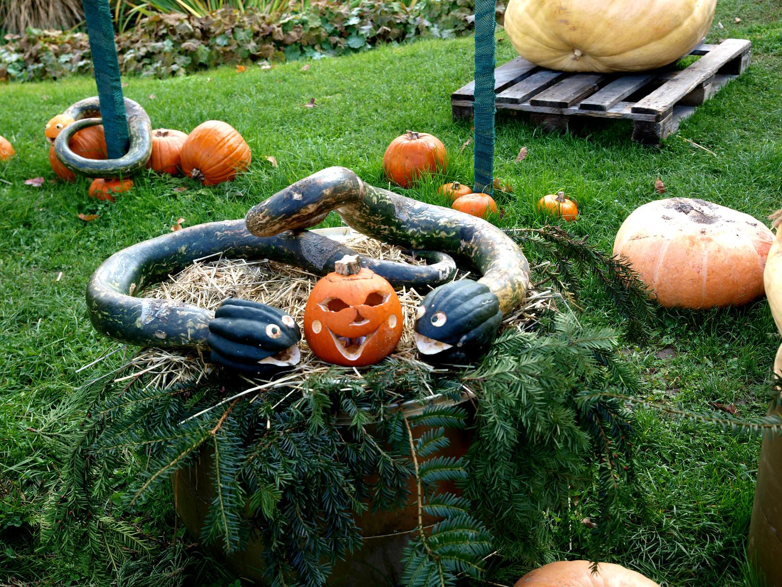 Ludwigsburg: Pumpkin Exhibition 2 by ThePraiodanish