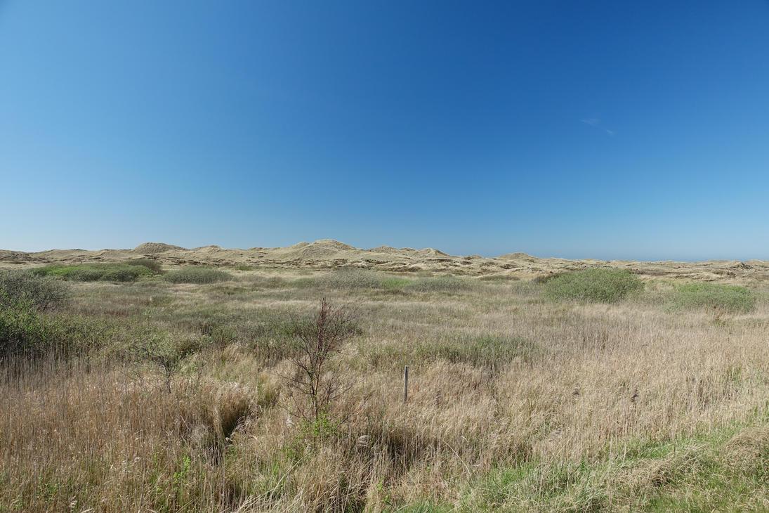 endless fields by ThePraiodanish