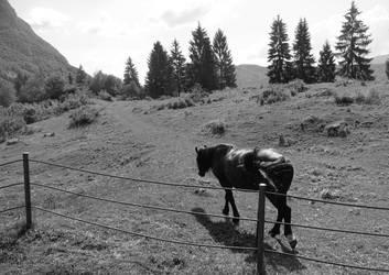 Horse in solitude by ThePraiodanish