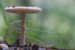 Proud Mushroom