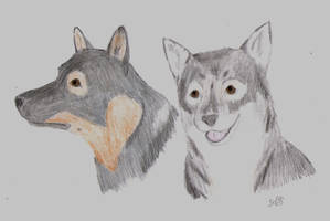 Vallhunds by Sefja