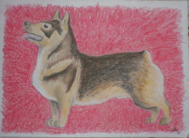 Vallhund by Sefja