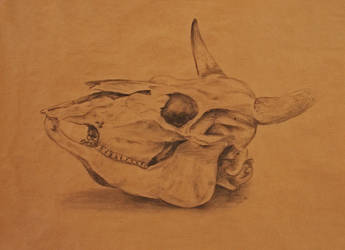 Cow skull by Sefja