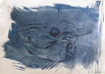 Cyanotype: Skull by Sefja